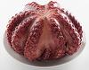 Frozen Cooked Octopus