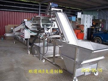 Taiwan Shrimp Washing / Classification Line ( Custom-Made