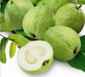 Taiwan Guava Taiwantrade Com