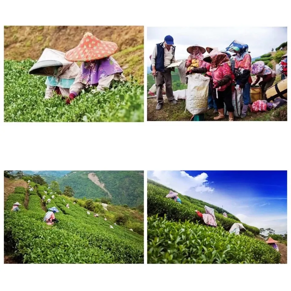 Taiwan Premium Oolong, Da-yu-ling Green Tea Leaves with Organic Pyramid bags, best gift for New Year 2019