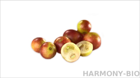 Camu Camu Natural low calorie powder superfood