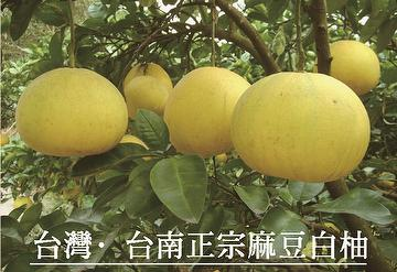 agricultural grapefruit citrus,grapefruit gift box,Big white grapefruit,agricultural foods citrus fruits,
