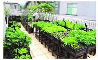 Multi Function Planting Box (