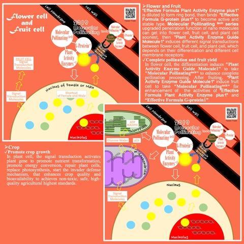 Principle of Molecular Pollinating tech series