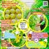 Organic Melon Farm