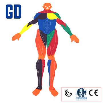 Anatomical Model GDYS-242