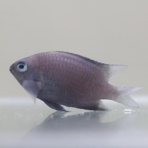 峰漁 水產種苗