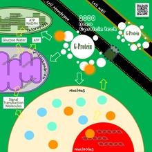 Principle of Nano G-protein tech