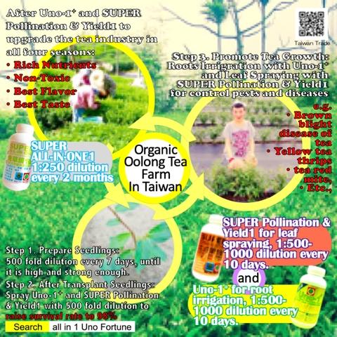 Organic Oolong Tea Farm