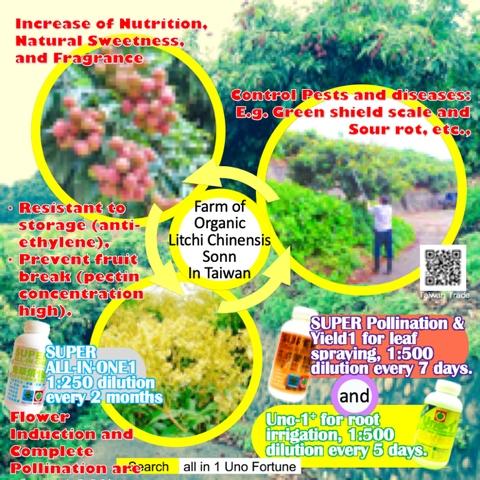 Farm of Organic LitchiChinensis Sonn