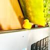 Yellow Duck Character Anti Dust Plug