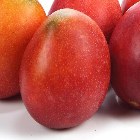 Fresh Irwin Mango