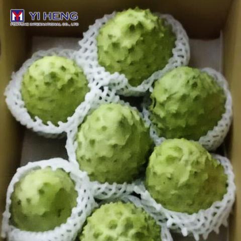 Atemoya Custard Apple Fruit (Buddha's Head)