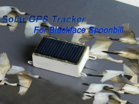 Taiwan Solar GPS Tracker for Blackface spoonbill BF5000 Introduction