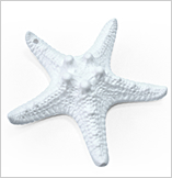 Houseware,starfish