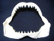 Great White Shark Teeth Jaws Taxidermy