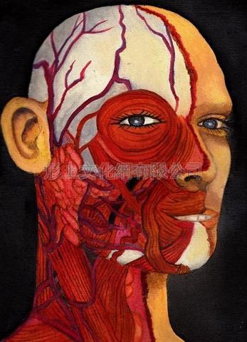 解剖学の先生