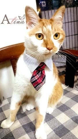貓咪用領帶, 寵物飾品, 飾品代工廠