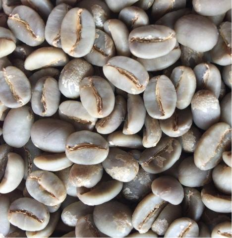 GO Dongshan Spring Water Processing Arabica Raw Beans