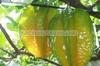 Honey Starfruit
