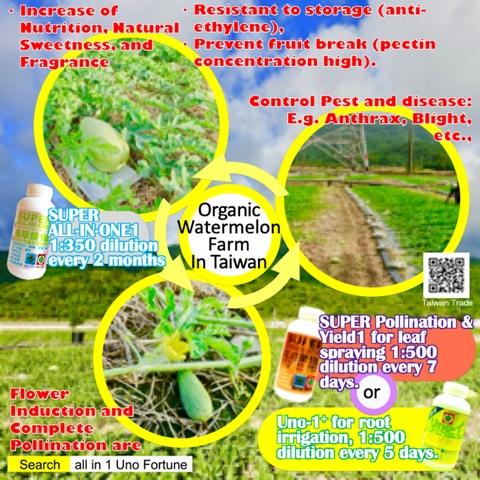 Organic Watermelon Farm In Taiwan