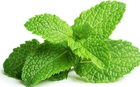 Peppermint essence oil in