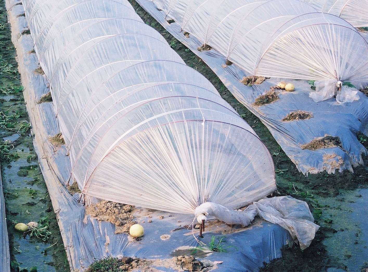 Taiwan Small Tunnel Greenhouse Film for building a easy low